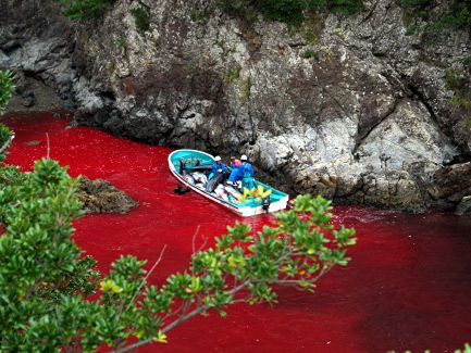slaughtered whales and dolphins, photo by Brooke McDonald/Sea Shepherd